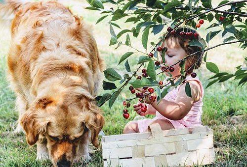 żywienie dzieci w czasie wakacji