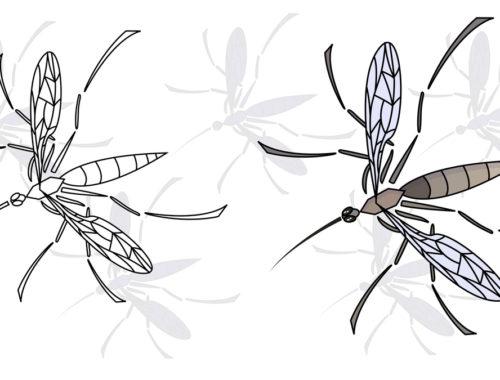 jak chronić się przed komarami